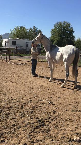 horse training.jpg